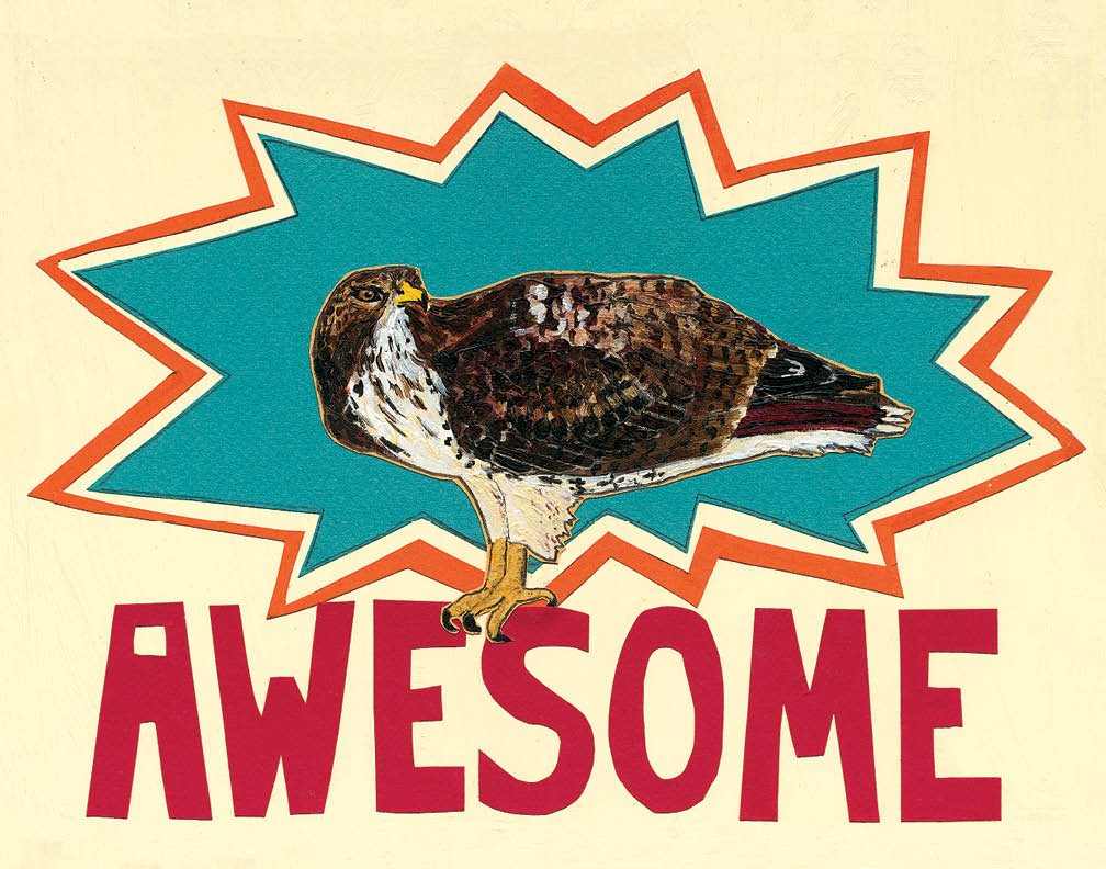 14x11 Awesome Hawk LP1 (LP1)