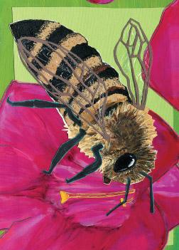 Bee S1 (S1)