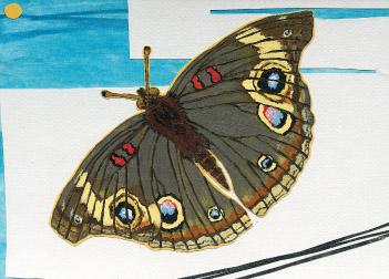 Moth S21 (S21)