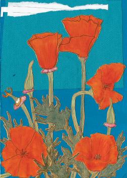 Poppies S7 (S7)