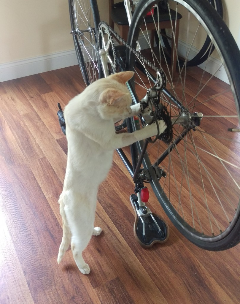 Just  fixin' my bike!