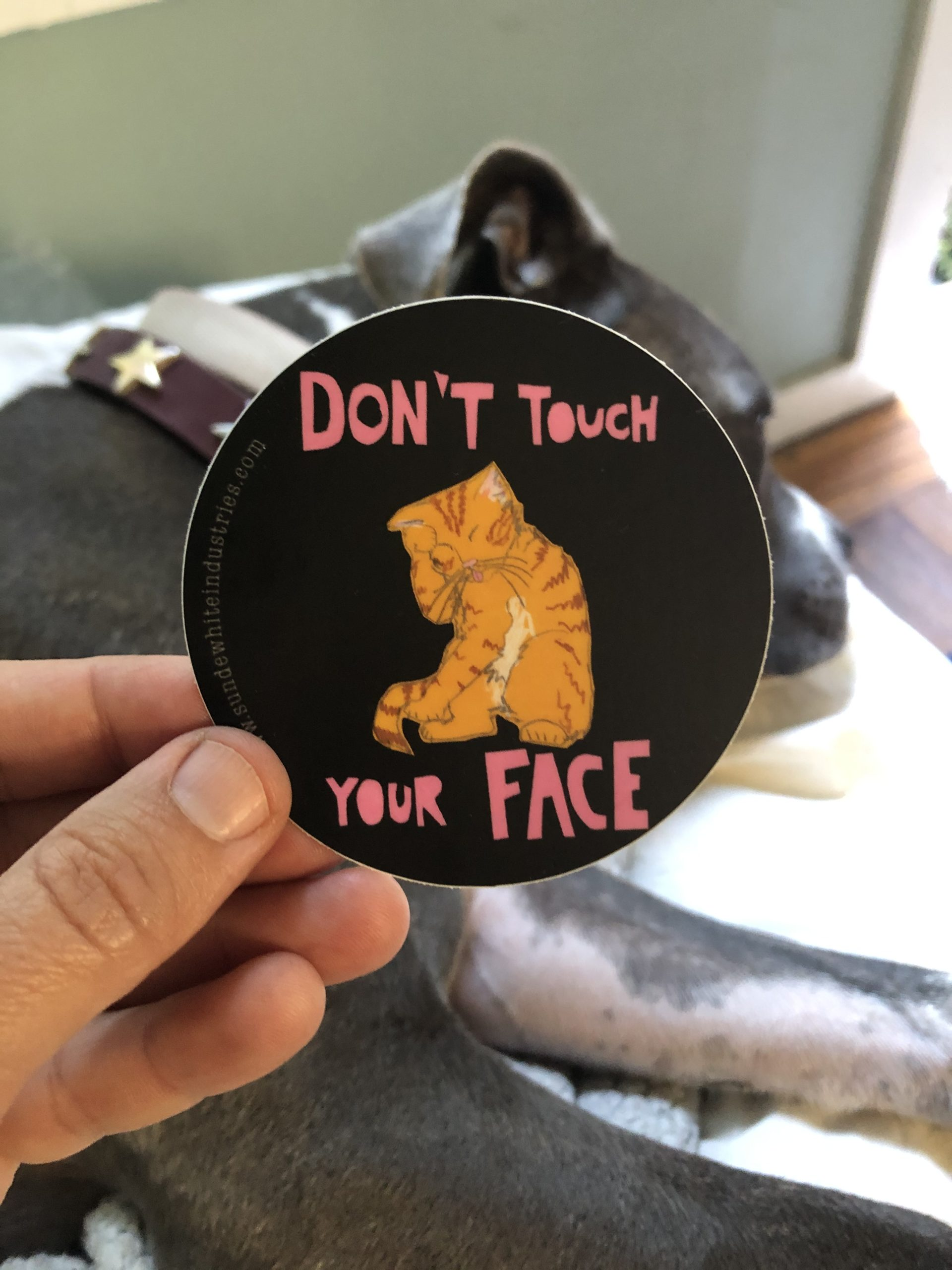 STicker of cat and text Don't touch your face