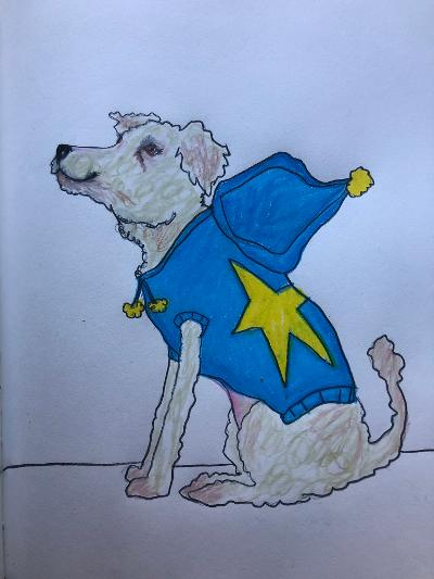 sunde white illustrates her haiku about a little dog in a sweater she keeps seeing